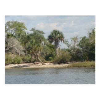 El río Crystal la Florida Tarjeta Postal