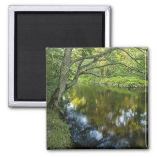 El río de Taunton en Bridgewater, Iman Para Frigorífico