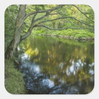 El río de Taunton en Bridgewater, Pegatina Cuadradas Personalizadas