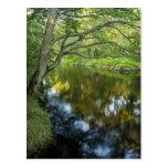 El río de Taunton en Bridgewater, Tarjetas Postales