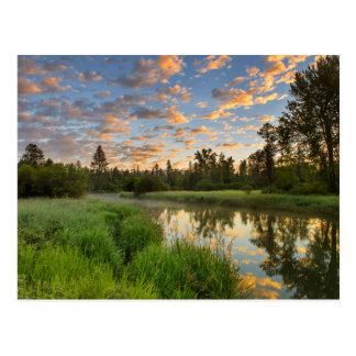 El río del pescado blanco con las nubes agradables postal