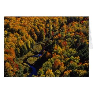 El río grande de la carpa en otoño en el puerco es tarjeta de felicitación
