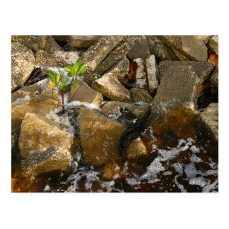 El río oscila bloques del cemento y el almácigo postal