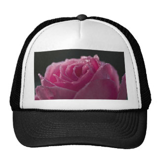 El rocío besó color de rosa rosado gorras