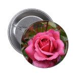 El rocío besó color de rosa rosado pins