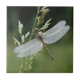 El rocío cubrió la libélula de Darner Azulejo Cuadrado Pequeño