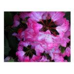 El rododendro florece #1 tarjetas postales