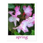El rododendro florece #2 postales