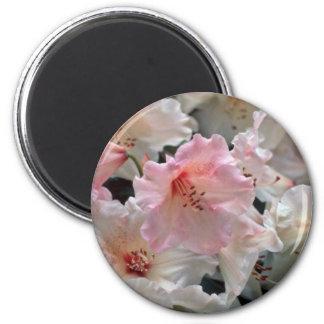 El rododendro florece las flores imán redondo 5 cm