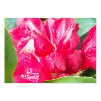El rododendro rojo florece el primer plantillas de tarjetas personales