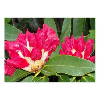 El rododendro rojo florece la abertura tarjeta de visita