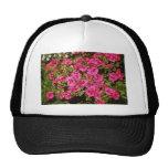 """El rododendro rosado Indicum """"subió"""" las flores (d Gorra"""