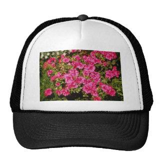 El rododendro rosado Indicum subió las flores d Gorra