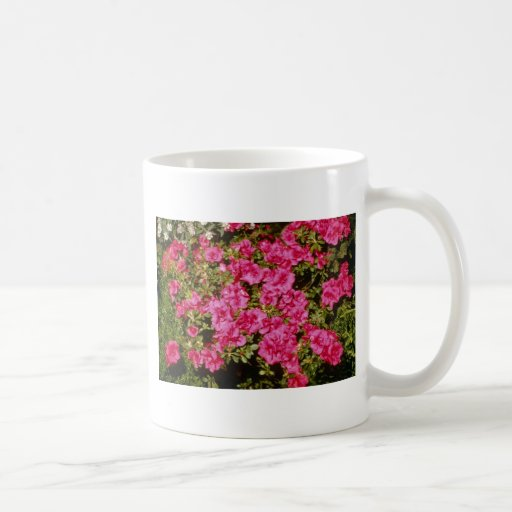 """El rododendro rosado Indicum """"subió"""" las flores (d Taza Básica Blanca"""