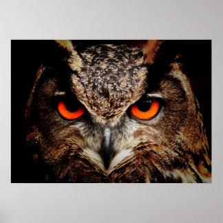 El rojo asustadizo observa el búho de Eagle Póster