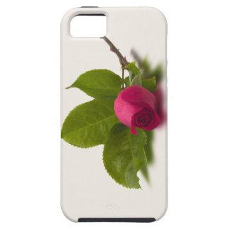 El rojo de Alec rojo del capullo de rosa iPhone 5 Carcasas
