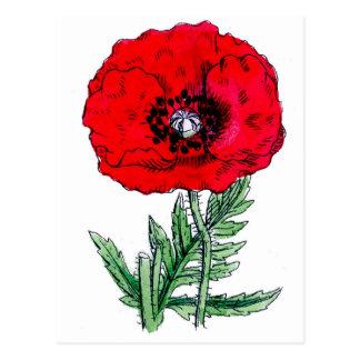 el rojo de la amapola florece los flores de las postales