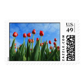 El rojo de los tulipanes florece el sello hermoso