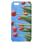 El rojo de los tulipanes florece la caja hermosa d