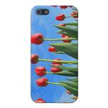 El rojo de los tulipanes florece la caja hermosa d iPhone 5 cárcasas