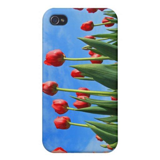 El rojo de los tulipanes florece la caja hermosa d iPhone 4 funda