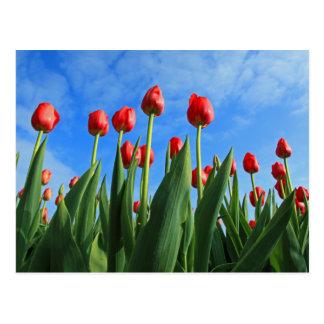 El rojo de los tulipanes florece la postal hermosa
