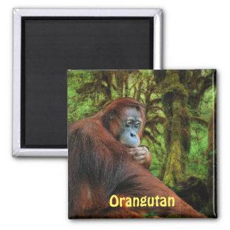 El rojo en peligro de los orangutanes imita el imá imán de frigorifico