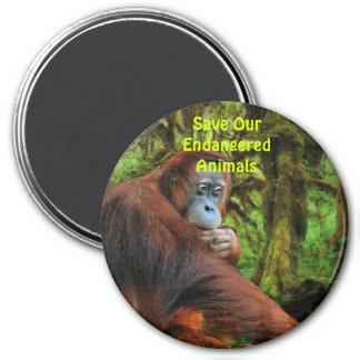 El rojo en peligro de los orangutanes imita el imá imán para frigorífico
