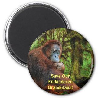 El rojo en peligro de los orangutanes imita el imá iman para frigorífico