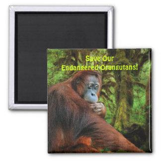 El rojo en peligro de los orangutanes imita el imá imanes