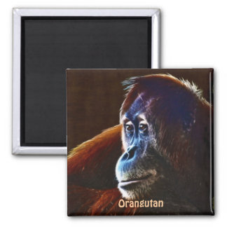 El rojo en peligro del orangután imita el imán del