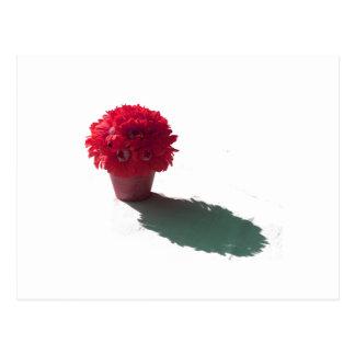 El rojo florece el cubo y la sombra blancos tarjetas postales