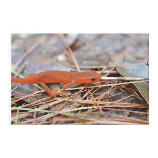 El rojo manchó la lona envuelta Newt Impresion En Lona