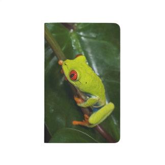 El rojo observa la rana en tronco cuadernos grapados