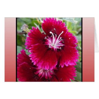 El rojo se ruboriza flor tarjeta pequeña