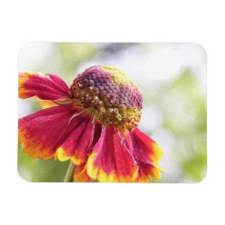 El rojo teñió la flor del Helenium Imanes