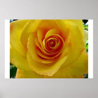 El rosa amarillo posters