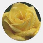 El rosa amarillo pegatinas redondas