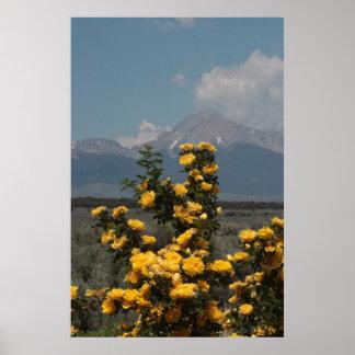 El rosa amarillo y Mt. Lindsey de Harison Póster