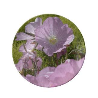 El rosa apacible del verano florece la placa de la platos de cerámica