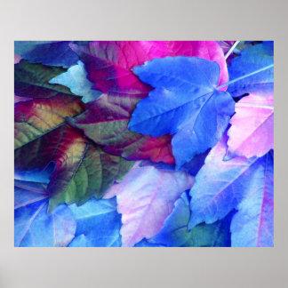El rosa azul de N deja el poster