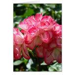 El rosa blanco del rosa de ROSAS florece 2 tazas d Tarjetas