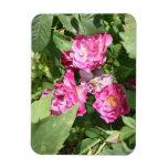 El rosa bonito florece el imán