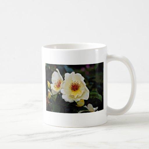 """El rosa de arbusto """"alas de oro"""" amarillea las flo taza de café"""