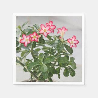 El rosa de desierto florece la planta servilleta de papel
