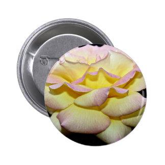 """El rosa de té híbrido """"paz subió"""" las flores blanc pin"""