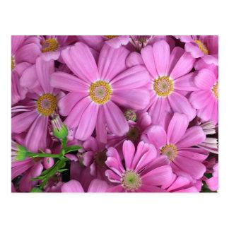 El rosa florece femenino personalizado tarjetas postales