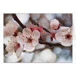 El rosa florece fotografía floral tarjeta de felicitación