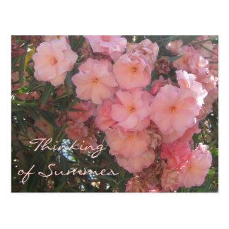 El rosa florece la postal