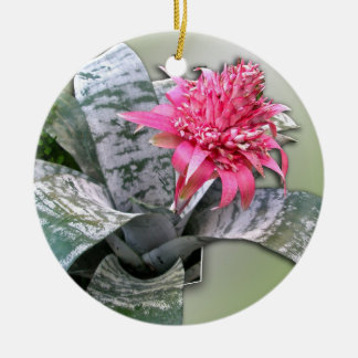El rosa floreció Bromeliad Adorno Navideño Redondo De Cerámica